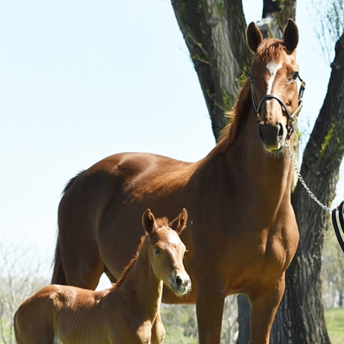 Photo of Broodmare with foal